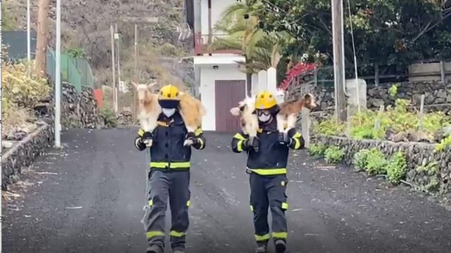 Bomberos de Gran Canaria rescatan animales y ayudan a los vecinos con sus mascotas y enseres