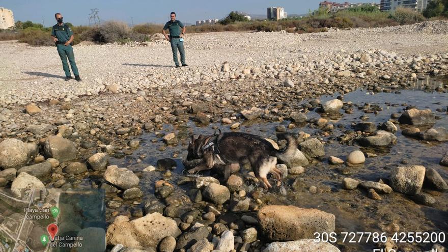 El Seprona investiga el envenenamiento de perros en la playa-can de El Campello