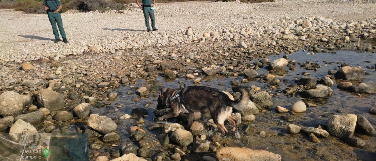 El perro especializado en detección de veneno en la playa-can, ante la mirada de los agentes del Seprona.