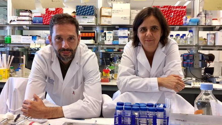 Descobreixen una nova funció d'una proteïna per combatre el càncer de mama