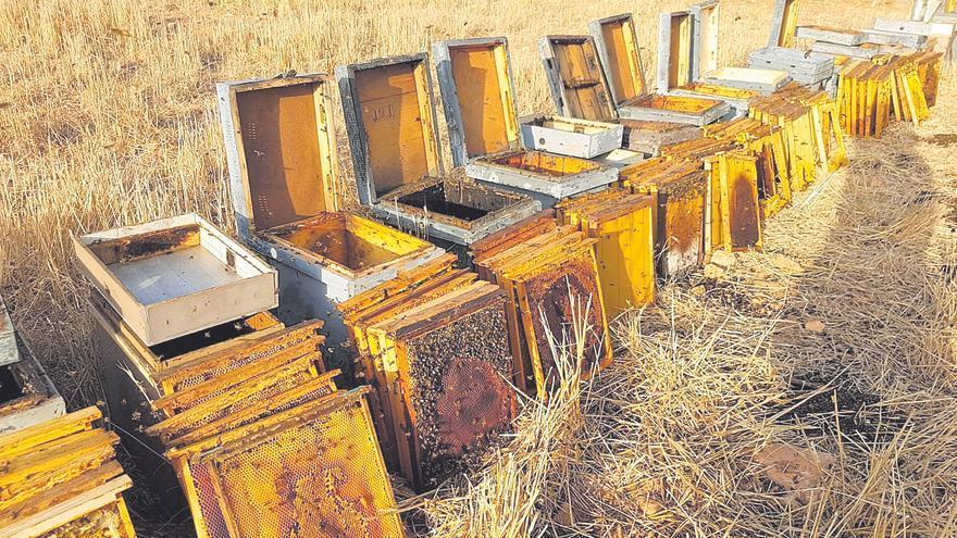 Una finca de sa Ràpita sufre el mayor robo de colmenas y material apícola