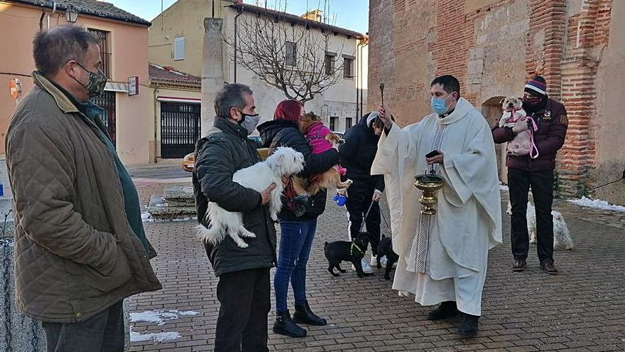 El COVID limita la fiesta de San Antón en Toro a la misa y la bendición de animales