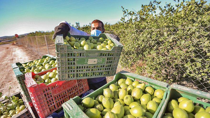 Campaña citrícola en la provincia: precios más altos pero en guardia por el covid