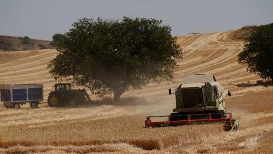 Los precios agrícolas seguirán bajos en la próxima década