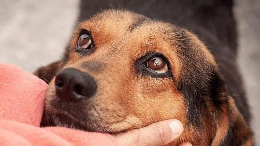La mirada de un perro abandonado en Ourense alcanza repercusión nacional