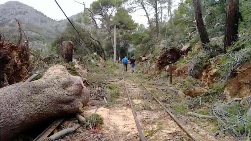 El Tren de Sóller reanuda mañana sus servicios tras reconstruir la catenaria