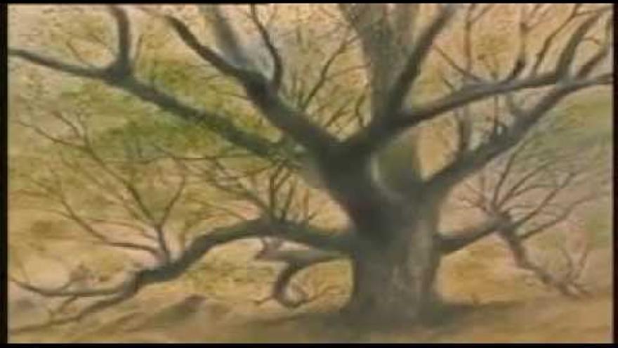 Seed, el hombre que plantó árboles