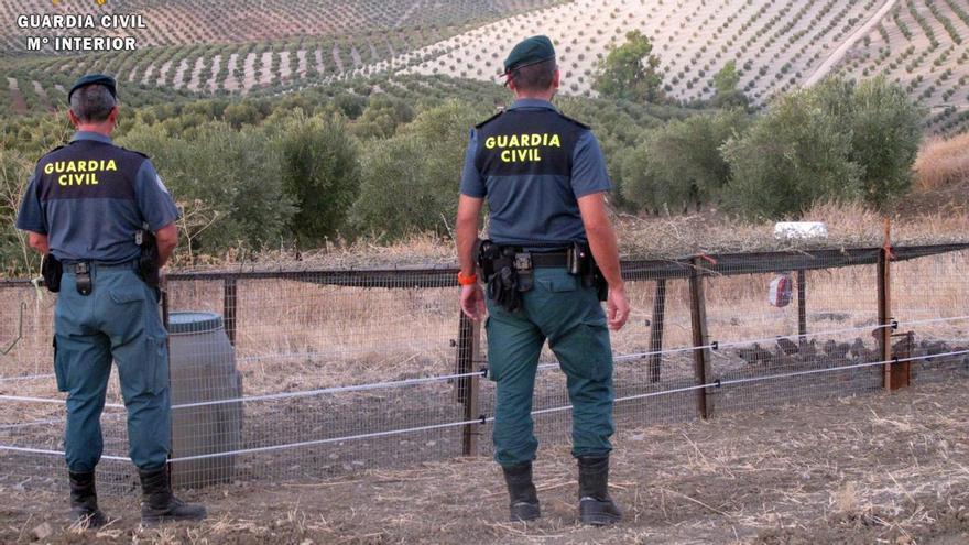 Investigan a dos personas por maltratar a 28 perros en Iznájar