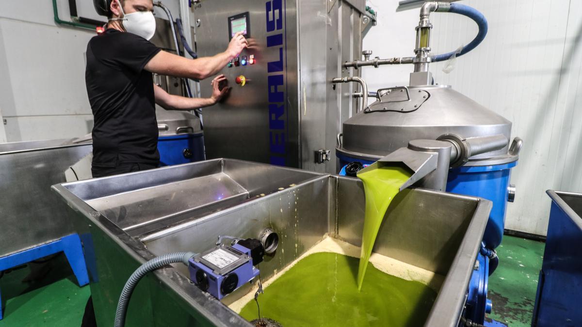 El primer aceite de  la campaña en las instalaciones de l'Almàssera de Millena.