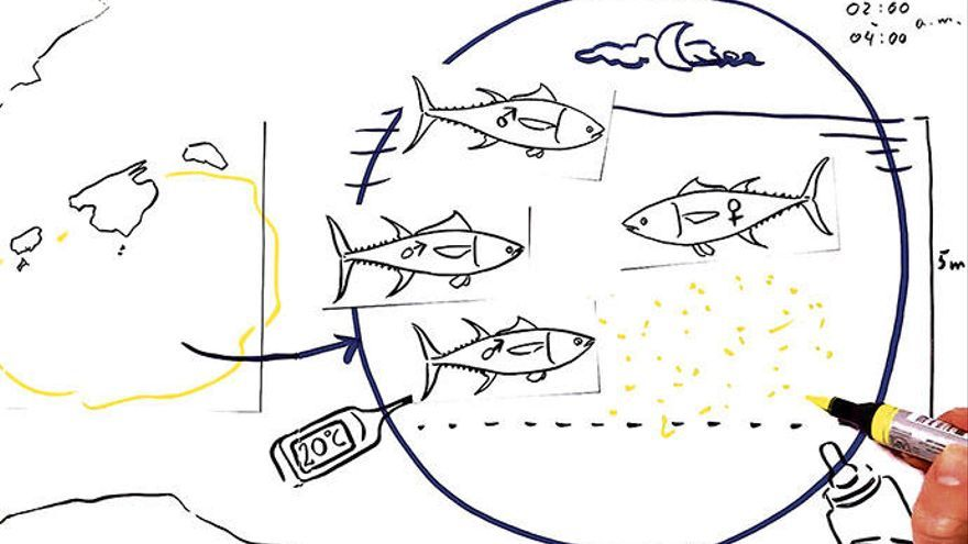 Die Fangquoten vom Thunfisch werden neu geregelt
