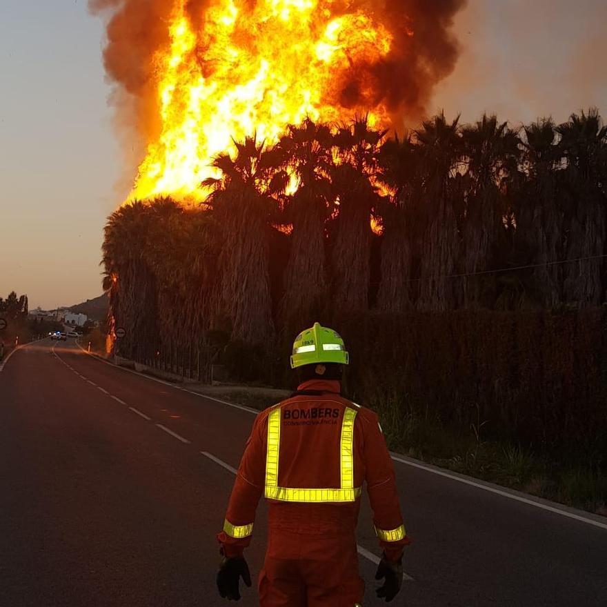 Un incendio en un palmeral de Cullera deja una gran columna de humo vista desde las poblaciones colindantes
