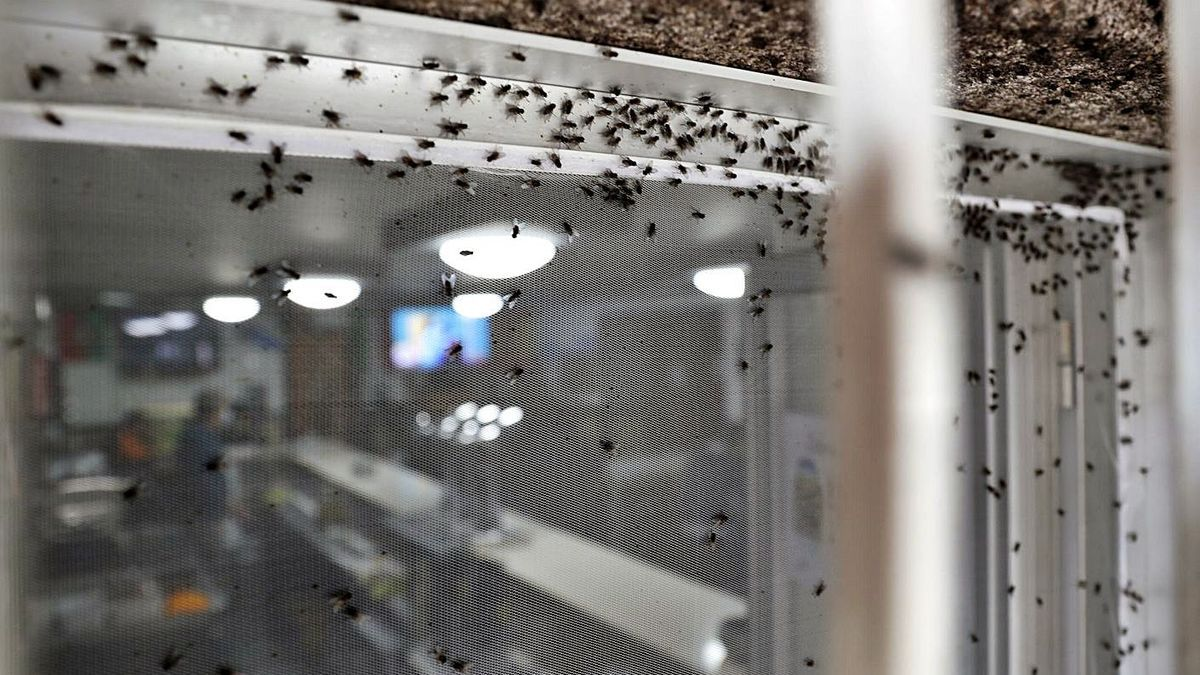 La mosquitera que protege un bar de la zona. |   // JOSE LORES