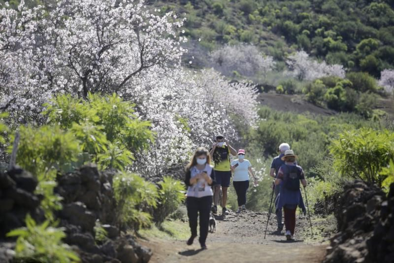 Ruta del Almendro en Flor en Santiago del Teide