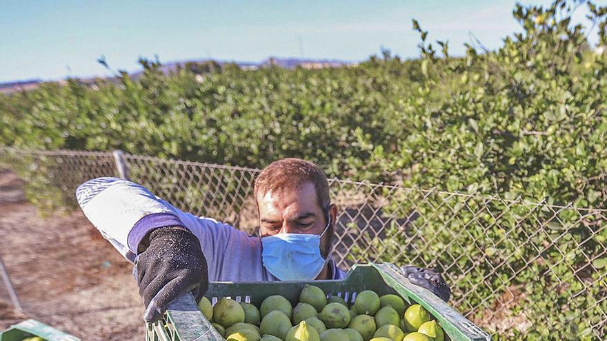 El limón mira ahora a EE UU tras perder 110 millones por el cierre de la hostelería