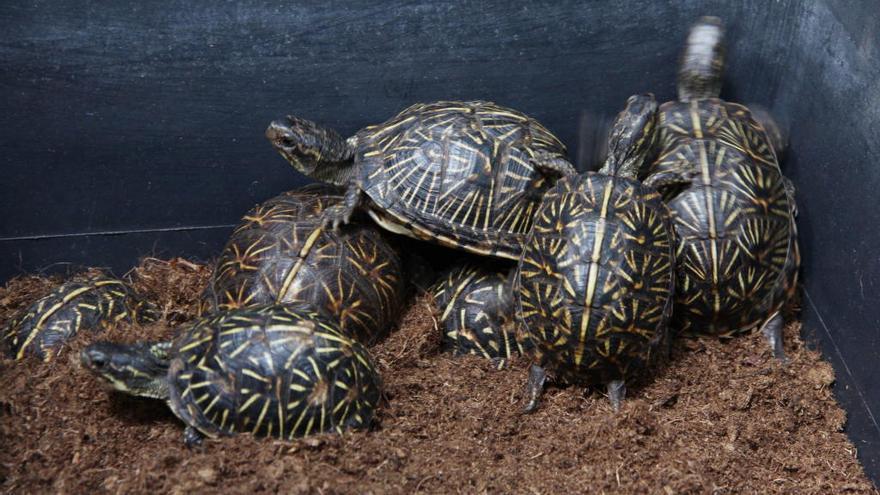 Natura Parc, refugio de tortugas incautadas