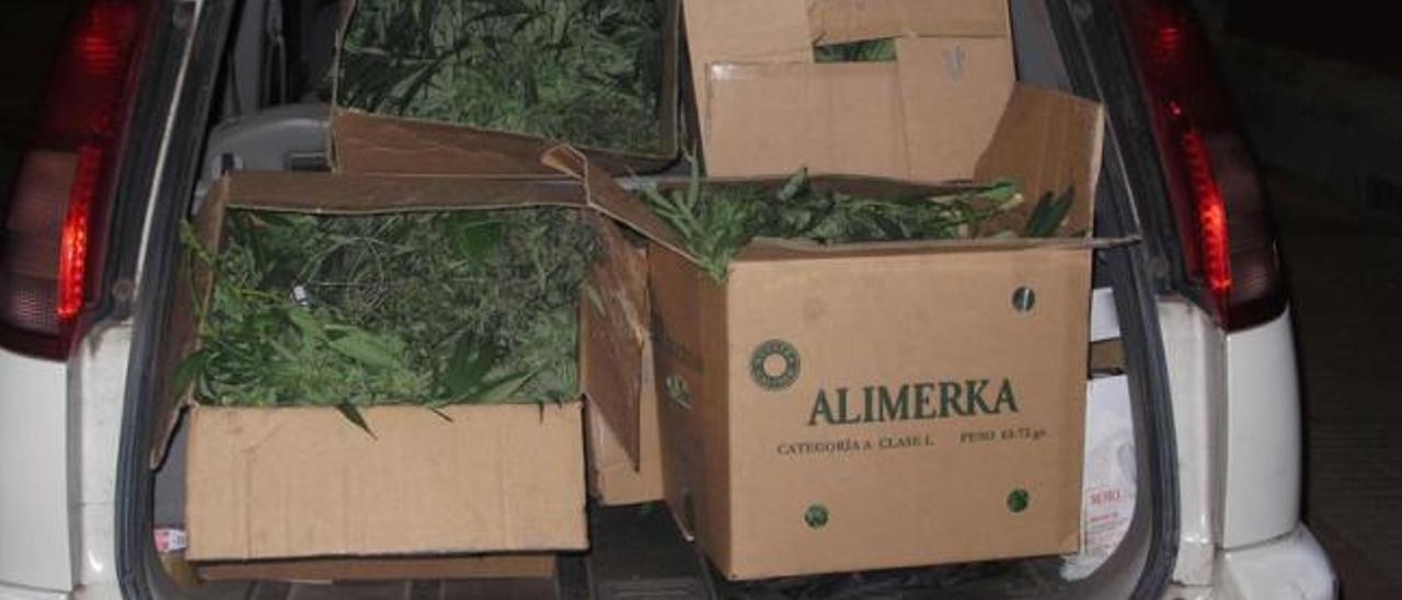 La marihuana encontrada en el piso de Serrapio incendiado, cargada en un coche de la Guardia Civil.