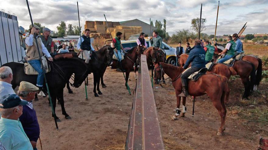Fiestas en Zamora: Encierro campero en San Miguel de la Ribera