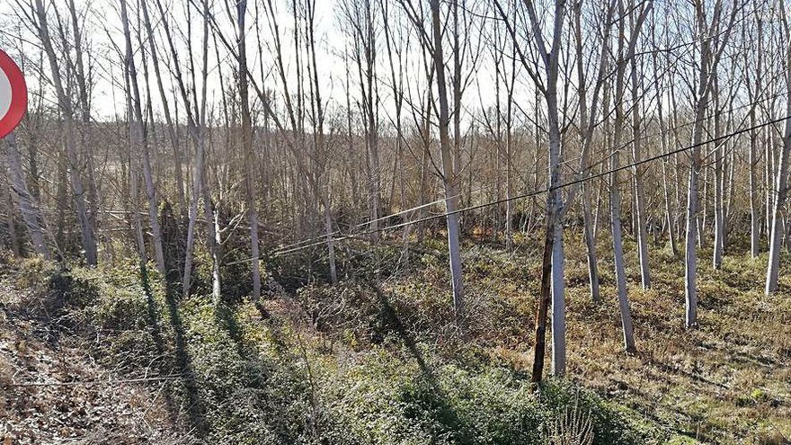 Caen varios árboles en el tendido eléctrico de Santa Marta de Tera