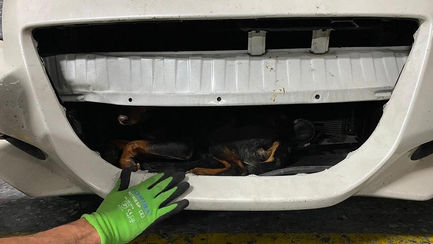 Bomberos de Fuengirola rescatan vivo a un perro del capó de un coche que lo atropelló dos día antes