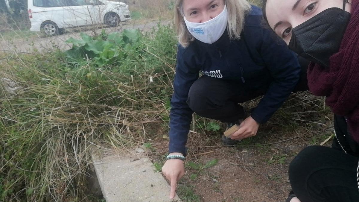 Nutrias en Burriana: detectan su presencia por primera vez en el Clot