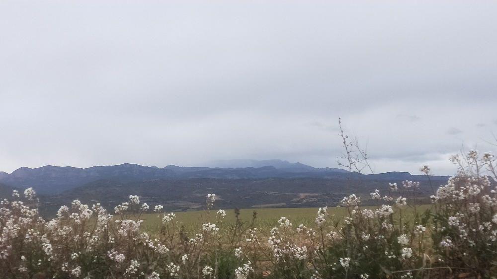 Neu als Rasos de Peguera i flors al camp.