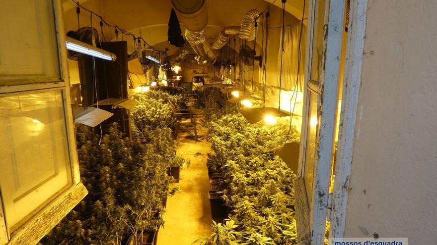 Detenen tres adults i una menor per una plantació de marihuana en una granja mig abandonada a Cabanes