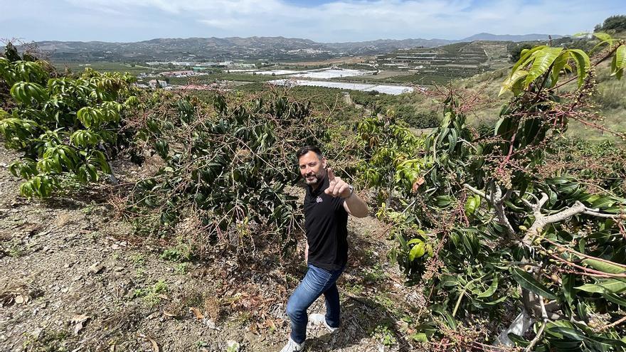 Sigfrido Fruit prevé incrementar un 20% su producción de subtropicales este año