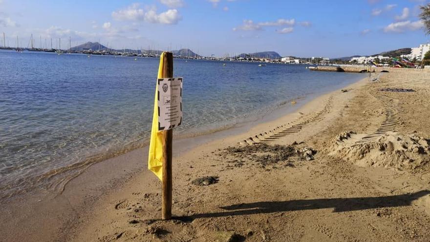 Salud insta a Pollença a cerrar una playa del Moll por vertidos fecales