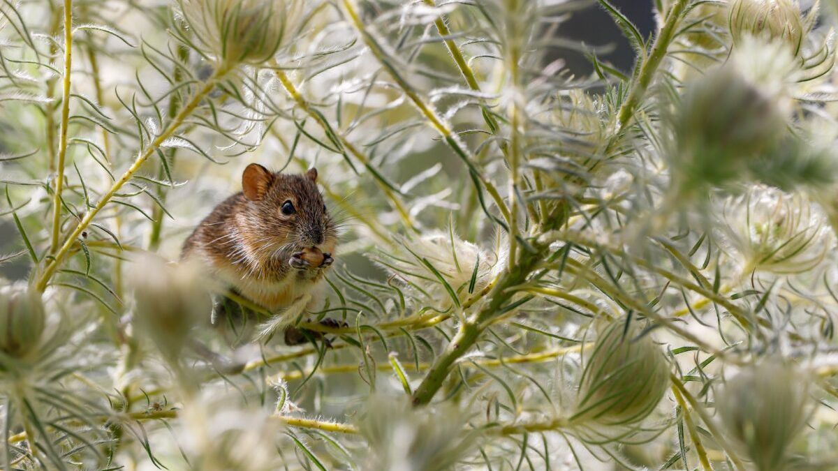 Descubren que los animales van adaptando su cuerpo al cambio climático