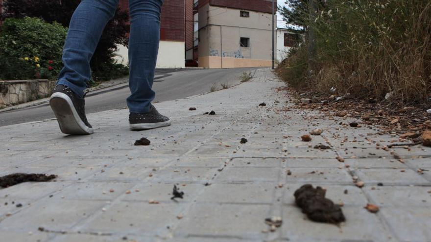 Crevillent inicia una campaña de limpieza contra los malos olores y los excrementos