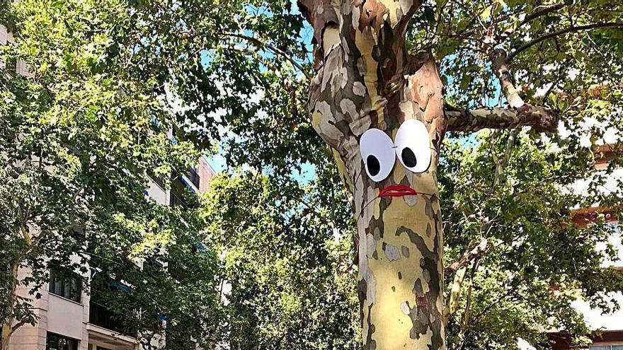 Reclaman al Ayuntamiento que mantenga los plátanos de sombra en Nuredduna