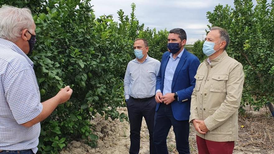 Biofertilizantes en cultivos para incrementar la sostenibilidad