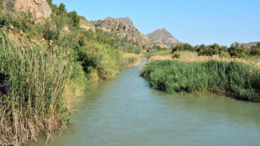 Exigen limpiar el cauce del río Segura a su paso por Abarán