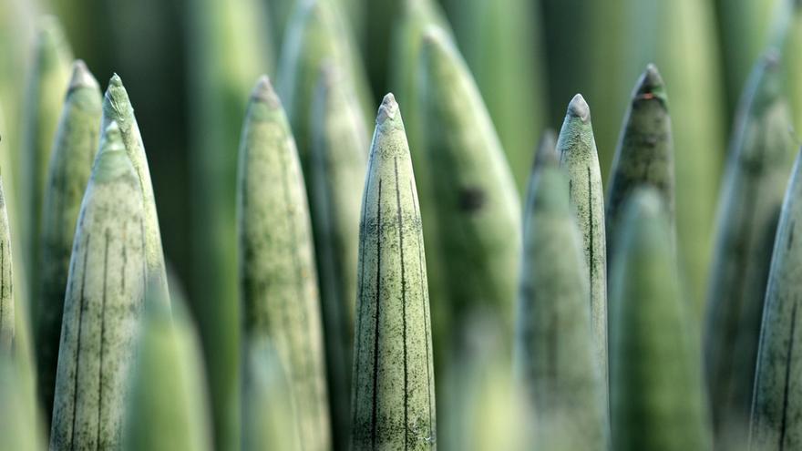 Las cuatro plantas que más tiempo duran sin regar