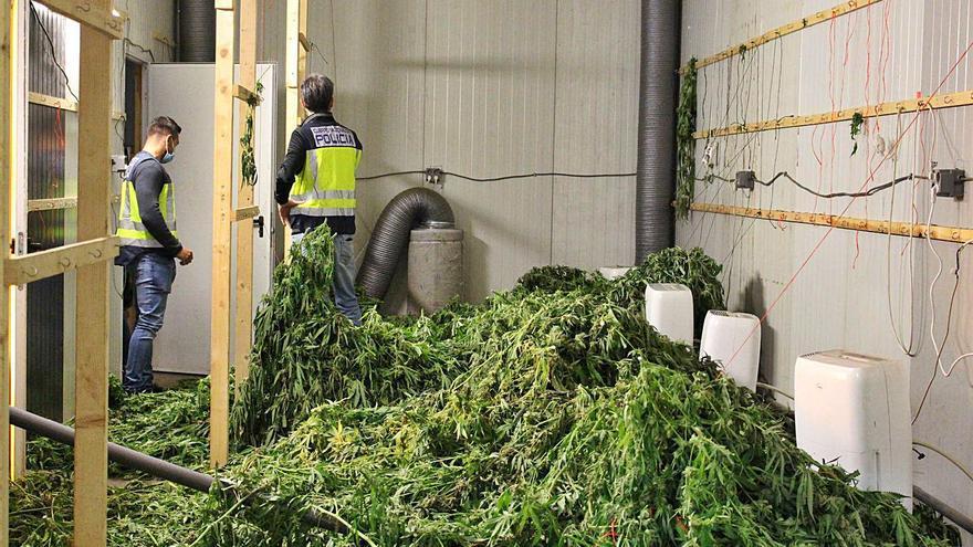 Detectan casi una tonelada de marihuana en Alaquàs lista para ser exportada a Holanda