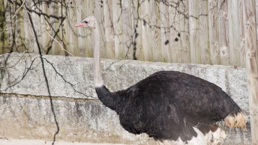 Excedente de animales en el zoo de Vigo