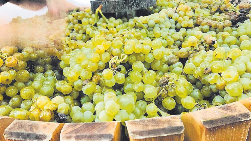 Málaga de vino