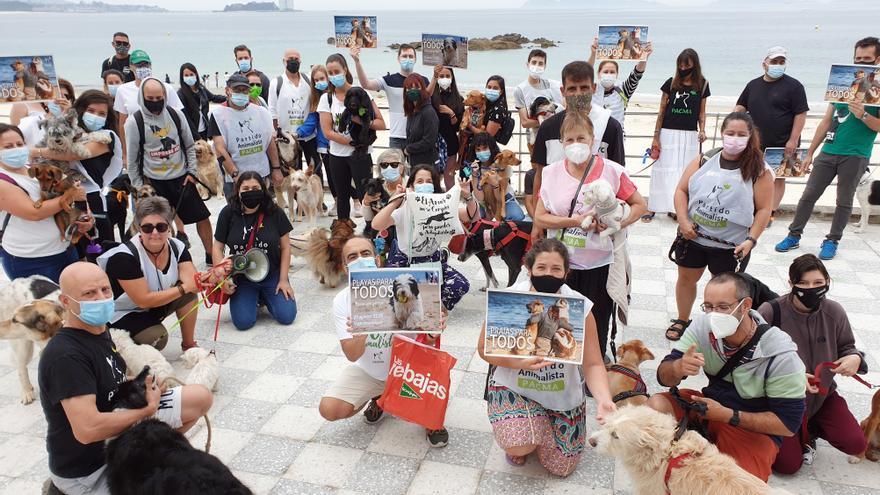 Los perros quieren playa