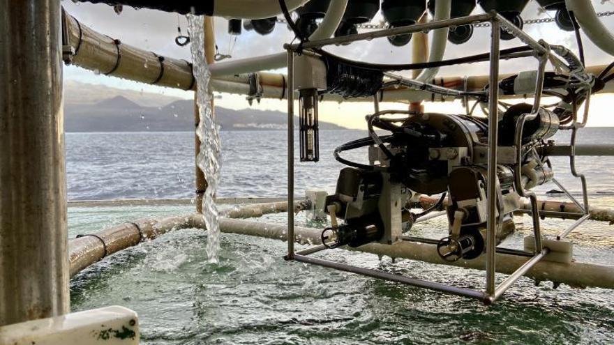 Los microplásticos colonizan y degradan el océano profundo de Canarias