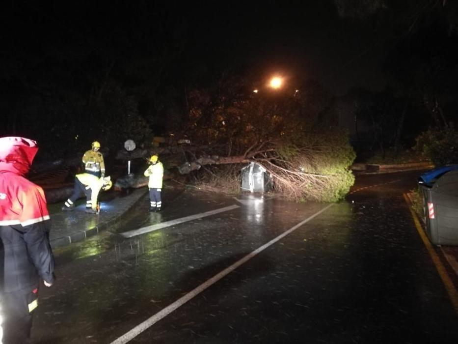 Imágenes del corte de una rama que afectaba al cableado eléctrico en Torrevieja.