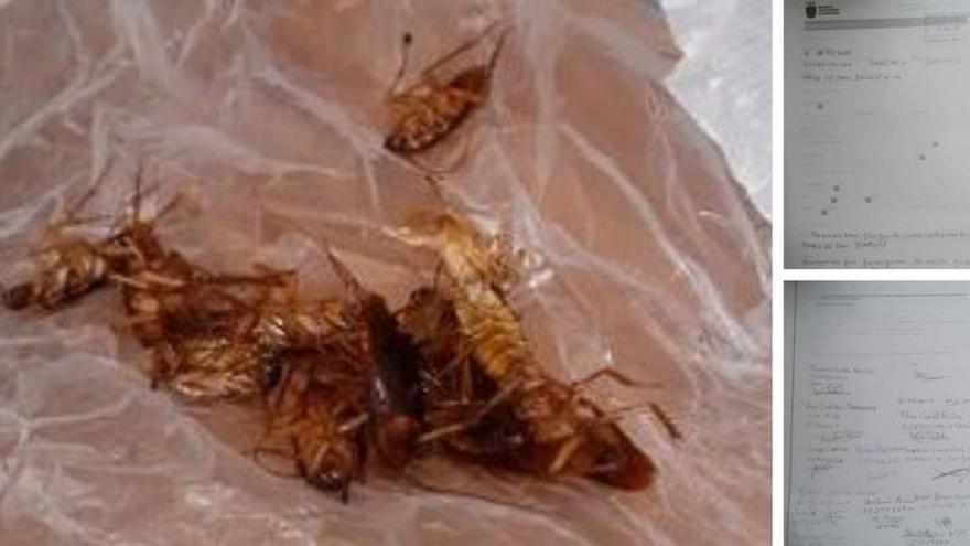 Vecinos de Burriana denuncian una plaga de cucarachas
