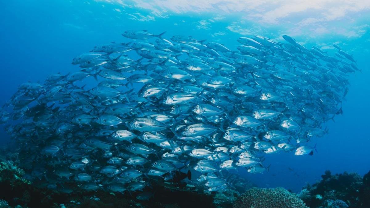 Los océanos ocupan el 75 % de la superficie de la Tierra y contienen el 97% del agua del planeta. La vida de los océanos está amenazada.