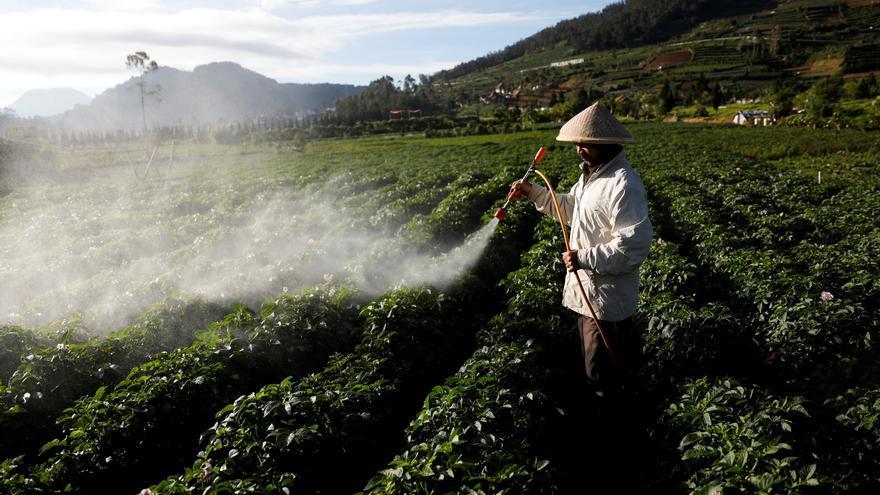 Pesticidas que arruinan la salud de los miserables de la tierra