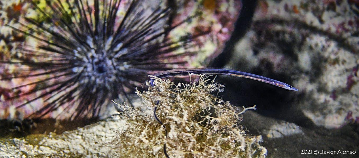 anguila.jpeg
