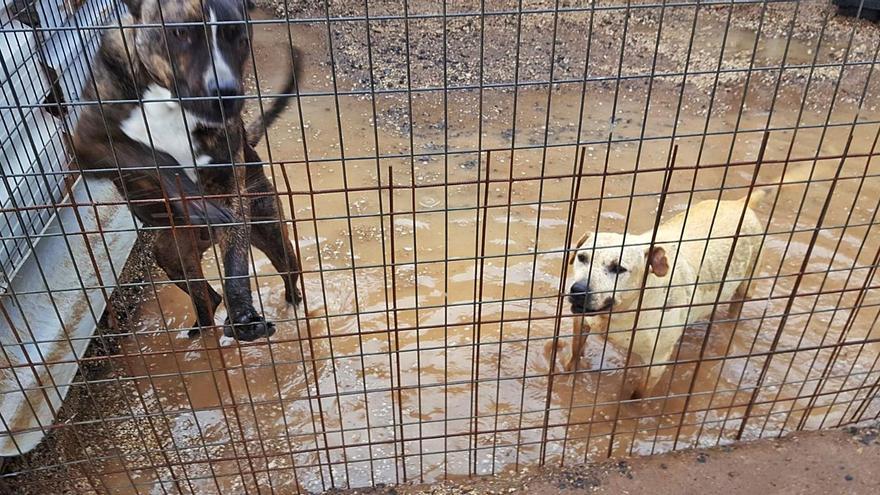 Evacuados más de 40 perros de Tierra Blanca después de inundarse el refugio