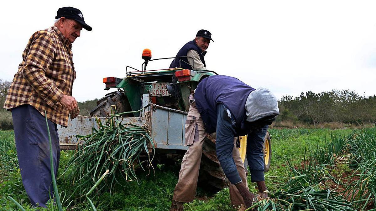 Consideren que «no hi ha un reconeixement comunitari i prou respectuós cap a la pagesia». | NÚRIA TORRES/ACN