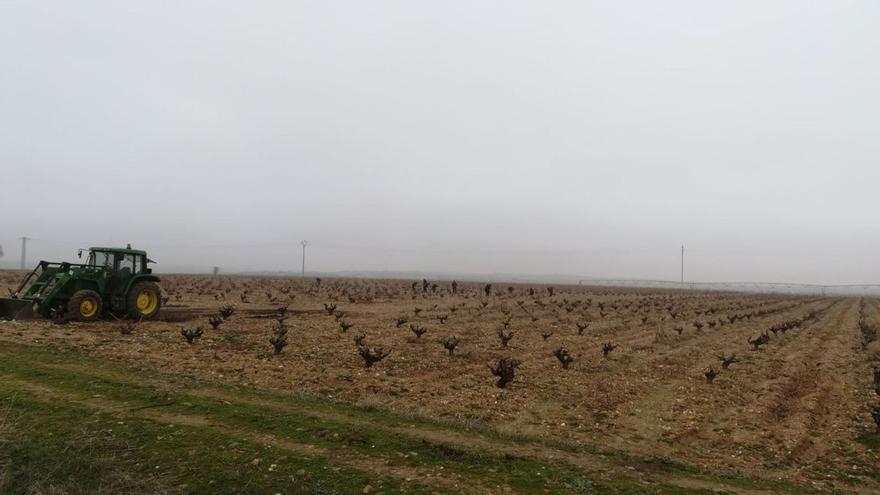 El sector del vino, dividido sobre medidas a tomar contra la crisis del COVID