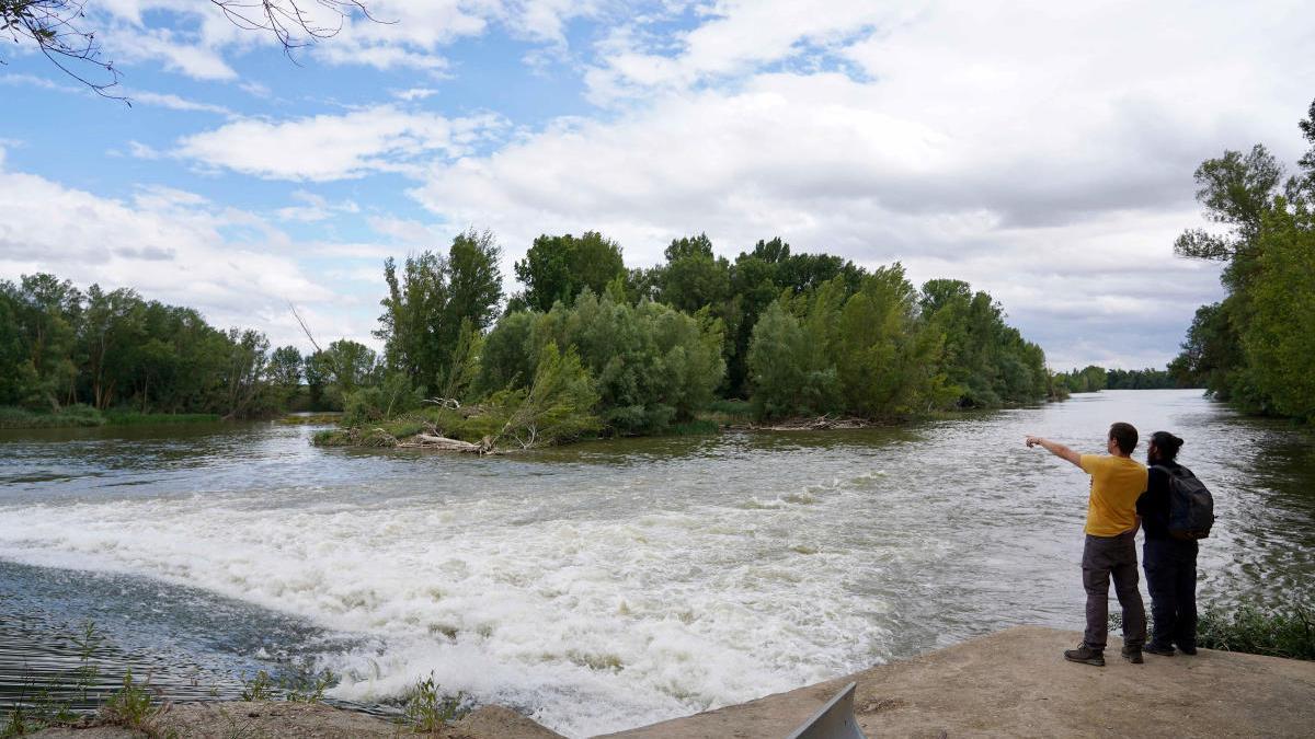 Búsqueda del cocodrilo en el río Pisuerga de Valladolid.