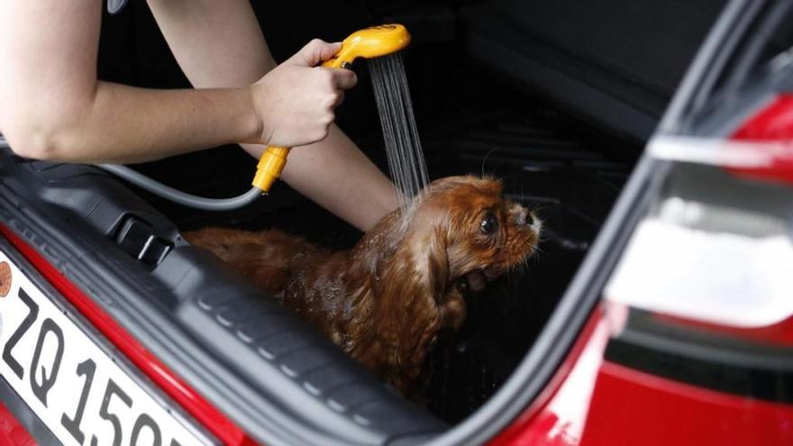 Ford convierte el maletero del nuevo Puma en un salón de belleza para mascotas