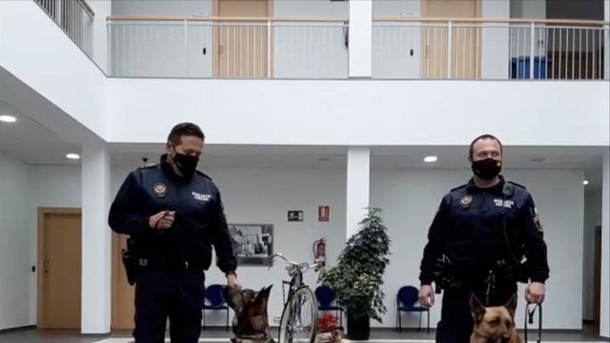 La jubilación con honores de 'Iris' y 'Loba', dos perras policía en Vila-real